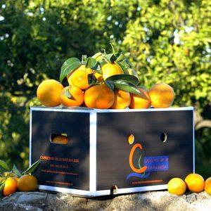 Naranja de zumo – 15 kilos
