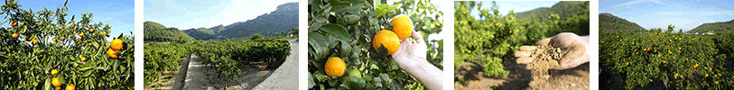 banners-naranjas813x100