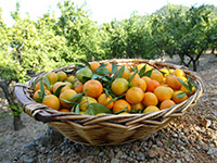 naranjas 100% naturales