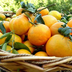 Naranjas de mesa – 10 kilos
