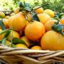 naranja-producto600x600