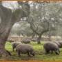 cerdos-en-el-campo-b-422x253