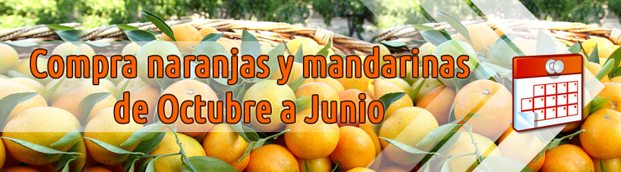 Compra naranjas de temporada, de octubre a junio