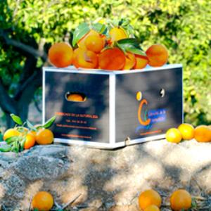 Naranja de sangre – 5 kilos