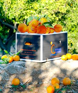 naranjas-sangre-imagen-destacada